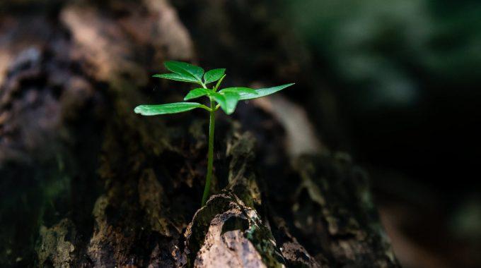 Keď Už človek Nemá Chuť Rozvíjať Sa, Začína Pomaly Umierať….